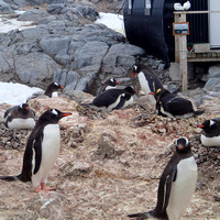 Port Lockroy_Antarctica_Jan2015_ 009