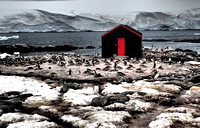 Port Lockroy_Antarctica_Jan2015_ 013