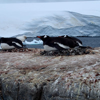 Port Lockroy_Antarctica_Jan2015_ 015