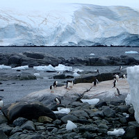Port Lockroy_Antarctica_Jan2015_ 018